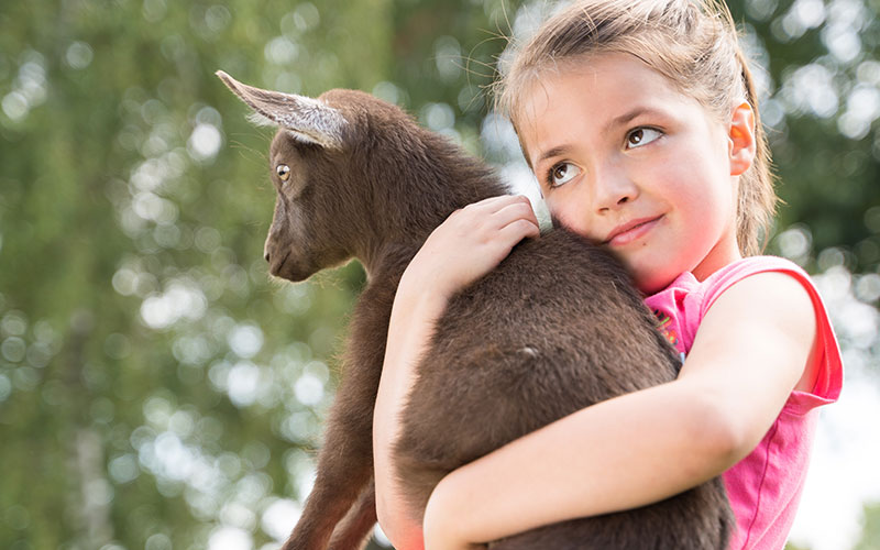 Young Girl Grinning and Holding Baby Goat
